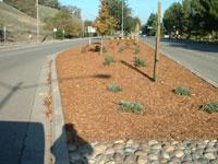 Programs_Erosion_Weed_3_s