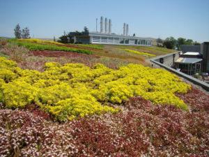Petaluma_Water_Treatment_Plant -Symbios_Project-DSC01870